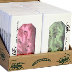 Ant Candy 24-Pack Set