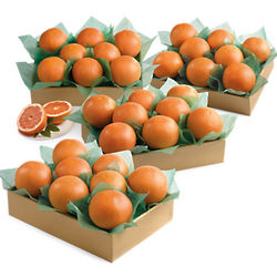 Crown Ruby Red Grapefruit in Grand Family Size Gift Box