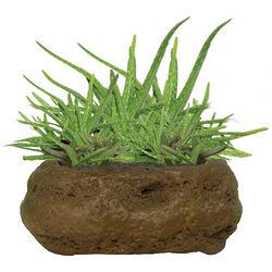 Soothing Aloe Rock Garden Kit