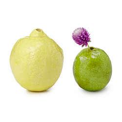 Lemon and Lime Bud Vases