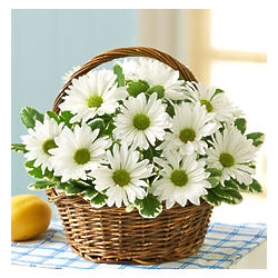 White Daisy Bouquet Basket