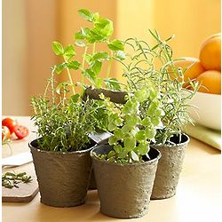 Mini Herb Pot Quartet