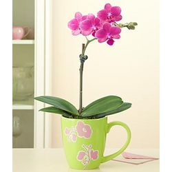 Baby Orchid with Ceramic Mug