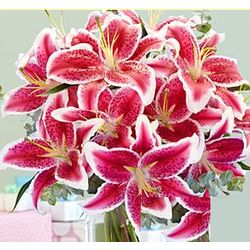 Deluxe Fragrant Birthday Stargazer Lilies Bouquet