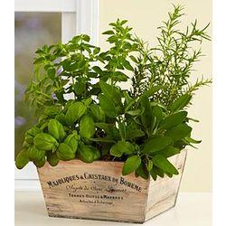 4 Gourmet Herbs Garden