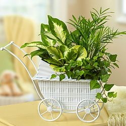 Lush Garden in Decorative Stroller