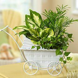 Lush Garden in Decorative Stroller