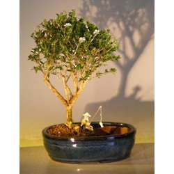 Flowering Mount Fuji Bonsai Tree with Fishing Scene