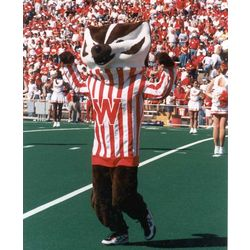 Photograph of Bucky Badger