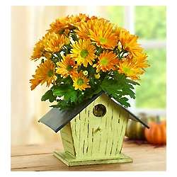 Bird House of Blooms Planter with Chrysanthemums