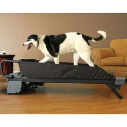 Large Canine Treadmill