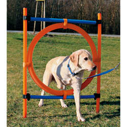 Dog's Agility Ring