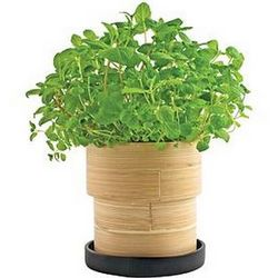 Mint Bamboo Herb Kit