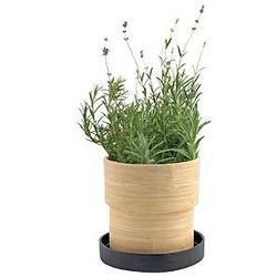 Lavender Bamboo Herb Kit