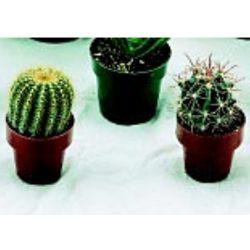 Cacti Plant Set