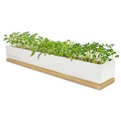 Grow Your Own Spice Micro-Greens