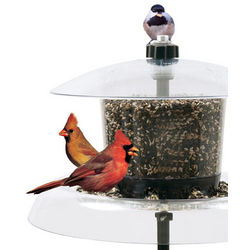 Jagunda Squirrel Proof Bird Feeder