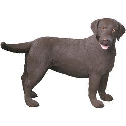 Chocolate Labrador Retriever Sculpture