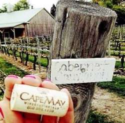 Cape May Winery Bicycle Tour for 1