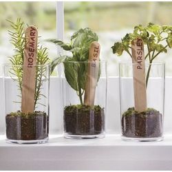 Herb Plant Trio Gift Set