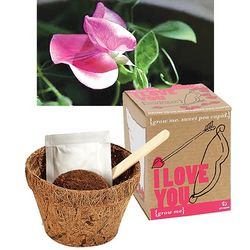 Sweet Pea Gift of Love Planter