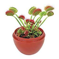 Venus Fly Trap Kit