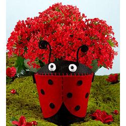 Red Kalanchoe in a Love Bug Planter
