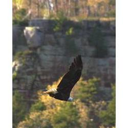 On Eagles' Wings Photographic Print