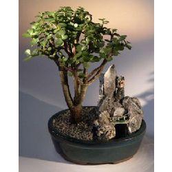 Baby Jade Bonsai Tree Stone Landscape Scene