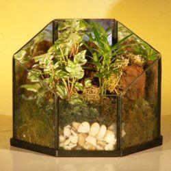 Open Terrarium Indoor Foliage Arrangement