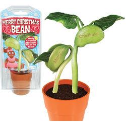 Grow A Merry Christmas Bean Kit