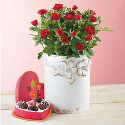Valentine's Day Mini Roses and Chocolate Set