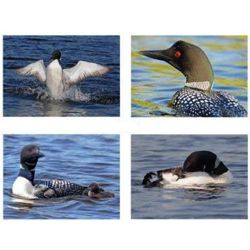 Wisconsin Loons Photo Note Cards