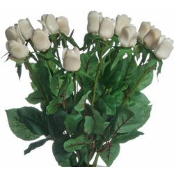 "Just Taguanut ""Ivory"" Roses - 14 Stems"