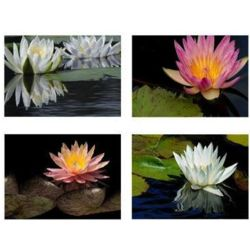 Wisconsin Water Lilies Note Cards