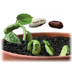 Magic Wishing Bean Favor