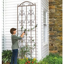 Single-Panel Montebello Short Trellis