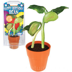 Grow a Happy Birthday Bean Kit