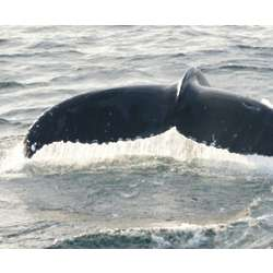 New York Harbor Whale and Dolphin Watching Cruise