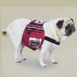 Urban Adventure Pet Backpack