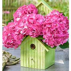 Birdhouse of Blooms Hydrangea Plant