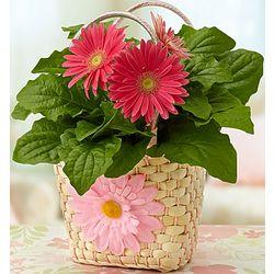 Happy Pink Gerbera Daisy Tote