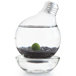 Moss Ball Light Bulb Aquarium
