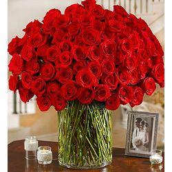 100 Premium Long Stem Red Roses in Vase