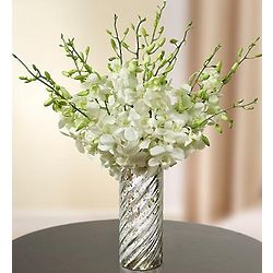 White Dendrobium Orchids for Sympathy