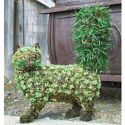 Fancy Cat Topiary