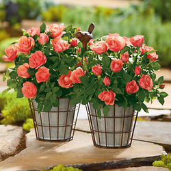 Dual Mini Rose Tin Planter