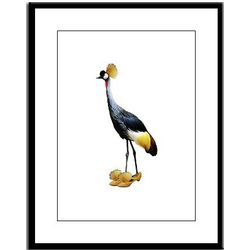 Yellow Crested Crane in Matching Shoes Framed Print