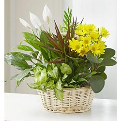 Dish Garden with Fresh Cut Flowers for Sympathy