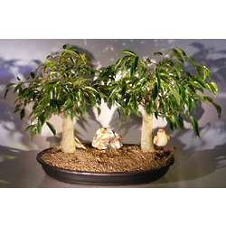 Double Oriental Ficus Bonsai Tree with Bird